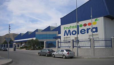 FRUTAS MOLERA